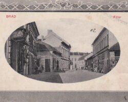 Brad imagine din secolul XIX