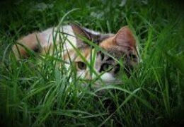 Cheti ascunsa in iarba