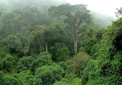 Foto: fr.rainforestfoundationuk.org