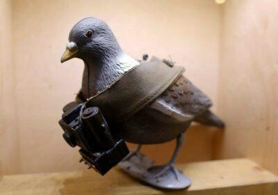 machetă a unui porumbel cu o cameră mică