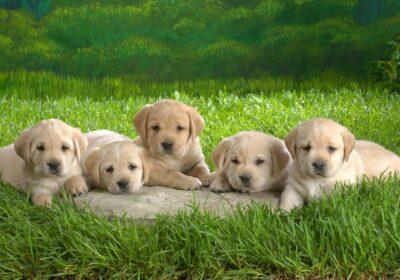 caini puppies-29