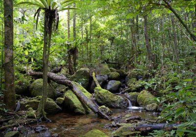 O pădure din Madagascar. Foto Frank Vassen